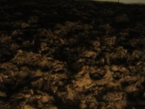 Cabellos cortados en Auschwitz.